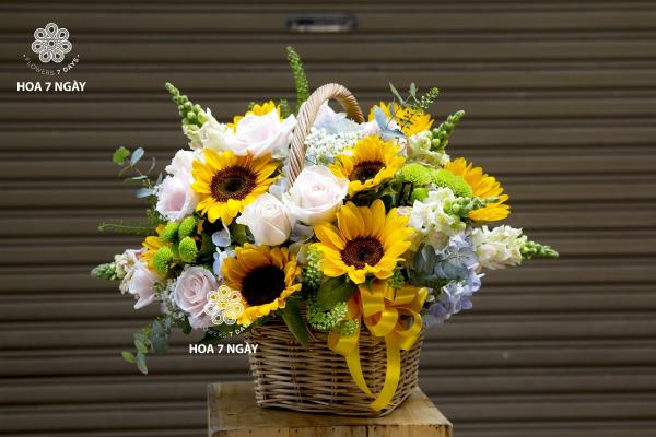 Hoa hướng dương - loài hoa của Mặt Trời