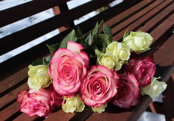 Màu sắc của hoa hồng nói lên điều gì? Hoa 7 ngày