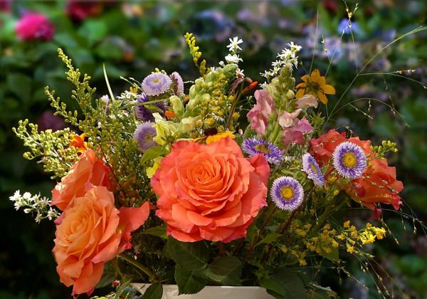Ý nghĩa hoa hồng cam - Hoa 7 ngày