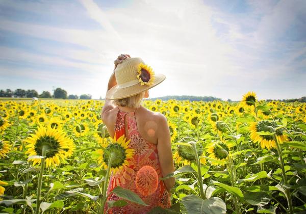 Ý nghĩa hoa hướng dương trong tình yêu - Hoa 7 Ngày