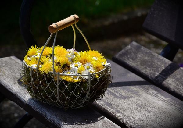 Hoa Cúc - Phúc lộc đầy nhà - Hoa 7 Ngày