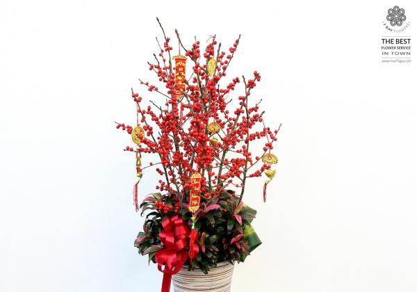 Đào đông đỏ cho năm mới trọn vẹn- Hoa 7 Ngày