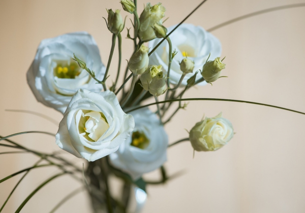 Cùng Hoa 7 Ngày ngắm sắc hoa mùa xuân dịp cận Tết