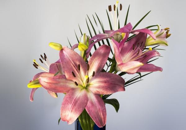 Những loại hoa tết đẹp cho ngày xuân rộn ràng- Hoa 7 ngày
