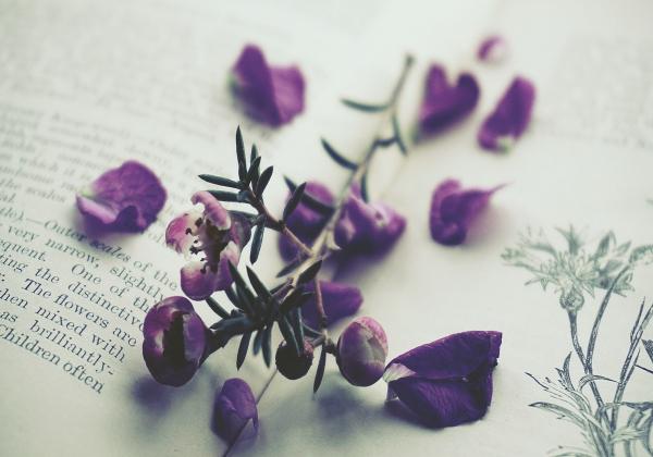 5 loại hoa tình yêu được ưu chuộng nhất trên thế giới</h3> Hoa 7 ngày