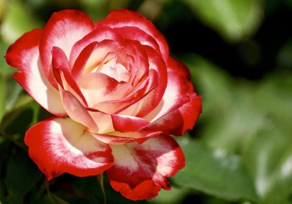 Khám phá công dụng bất ngờ từ hoa tươi - Hoa 7 Ngày