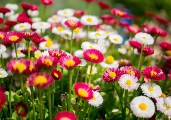 Mua hoa liền tay, nhận ngay may mắn! - Hoa 7 Ngày
