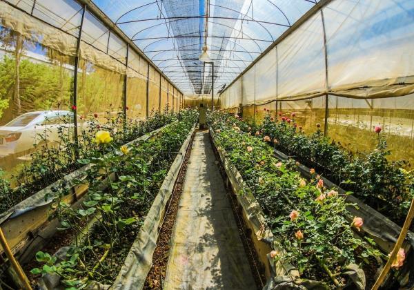 Cách chăm sóc hoa tại nhà- Hoa 7 Ngày