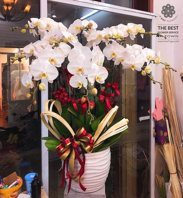 Đặt ngay hoa tươi văn phòng cho bạn - Hoa 7 Ngày