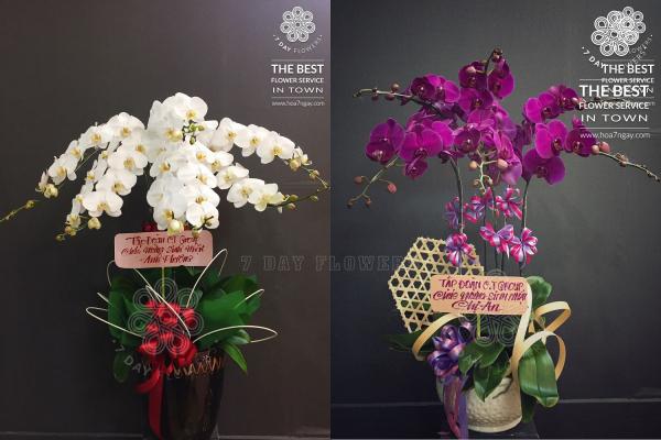 Mua hoa tp.hcm, ở đâu chất lượng tốt, Hoa 7 Ngày
