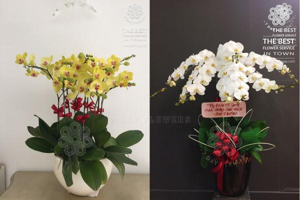 Làm sao để mua hoa tươi chất lượng nhất, Hoa 7 Ngày
