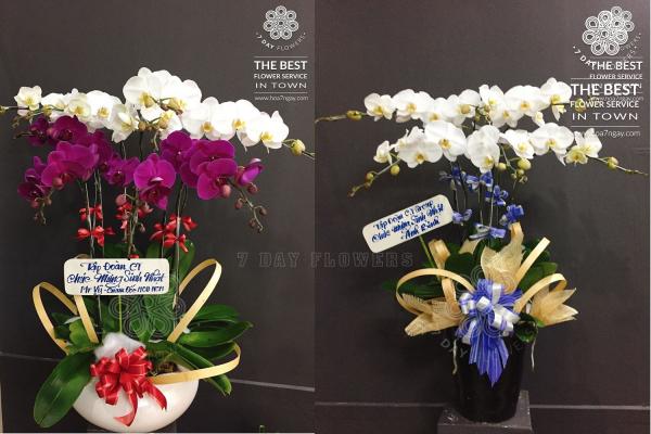 Chọn hoa tươi đẹp, giá rẻ và chất lượng tại Hoa 7 Ngày