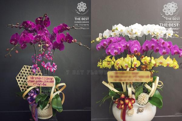 Mua hoa tươi văn phòng chất lượng tp.hcm tại Hoa 7 Ngày