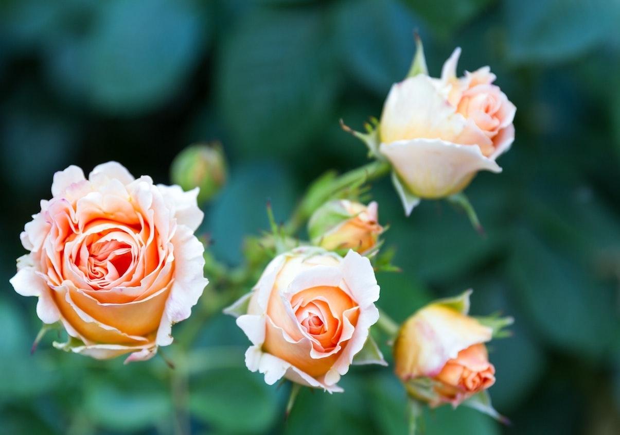 Mua hoa đẹp cho mùa đẹp nhất trong năm - Hoa 7 Ngày - Hoa7Ngay.com