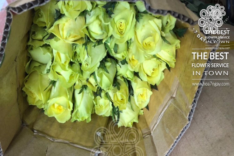 Ngày của cha có nên tặng hoa - Hoa 7 Ngày