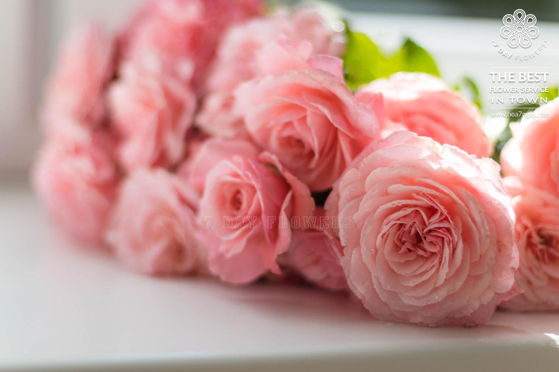 Địa chỉ mua hoa hồng ở tp.HCM uy tín, chất lượng - Hoa 7 Ngày