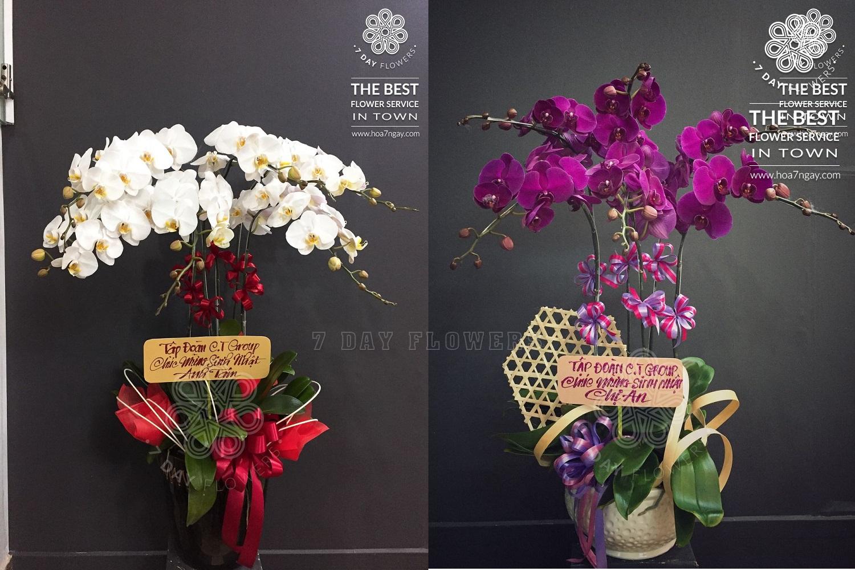 Mua hoa sinh nhật đẹp, ý nghĩa tp.hcm, Hoa 7 Ngày