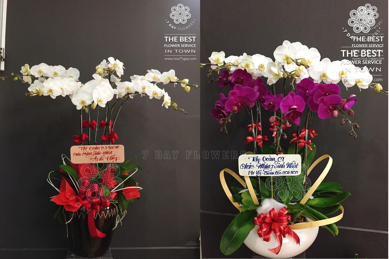 Những mẫu hoa văn phòng đẹp tp.hcm, Hoa 7 Ngày