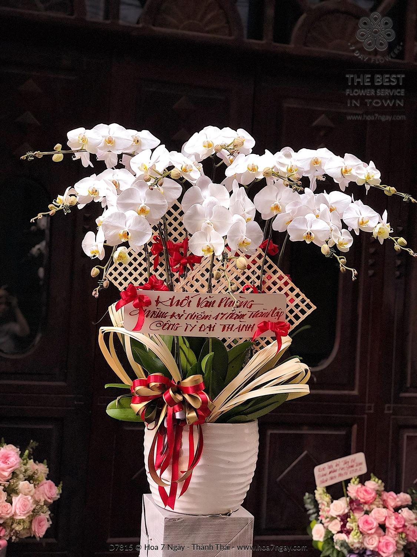 Khai Trương Hồng Phát 02